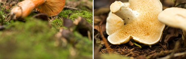 Photography Food & Lifestyle South Wales Forager