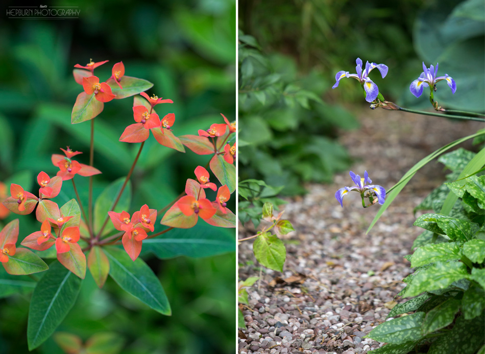Flower Portrait photographer Wales