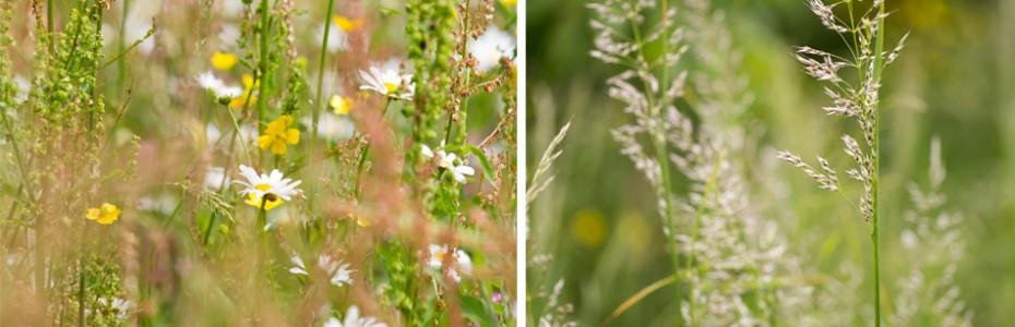 wild flower meadow garden in Monmouth South Wales