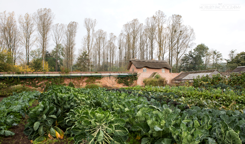 Garden lifestyle feature Hereford